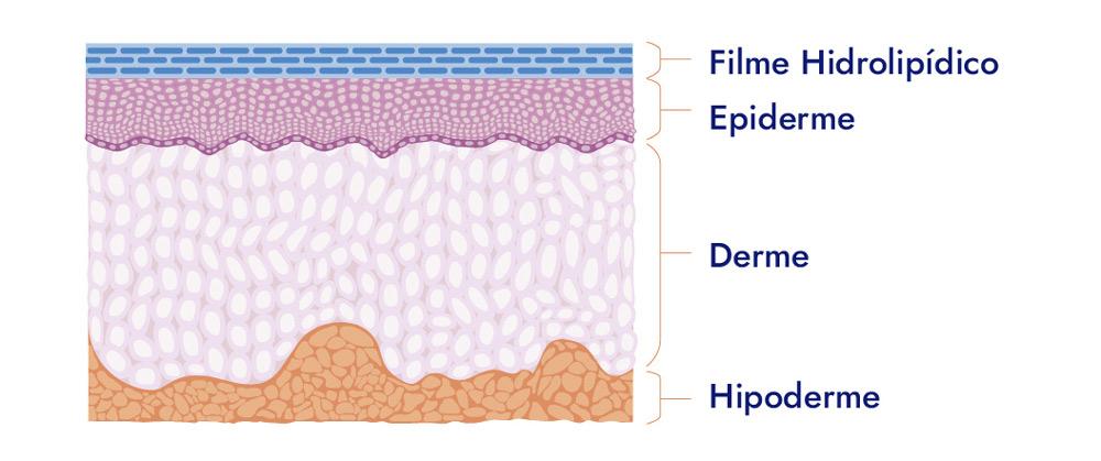 camadas-da-pele